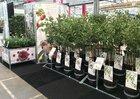 Wonder Tree & City Gardening | Fruithof
