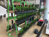 Amazingworld and Power Plant win Best Idea at Plantarium 2016